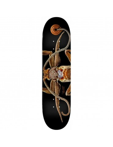 Powell-Peralta Marion Moth...